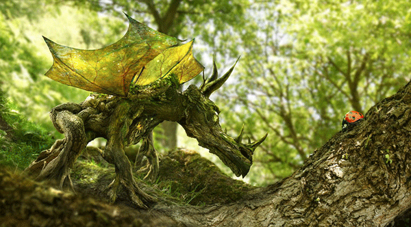 the-wood-dragon-the-ladybird