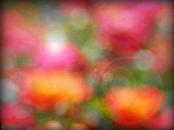 rose bokeh texture with flare 11 Fresh HQ Bokeh Textures with Commercial License