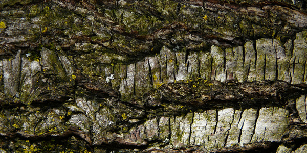 wood tree bark texture stock 60 Fresh High Resolution Textures (April Edition)