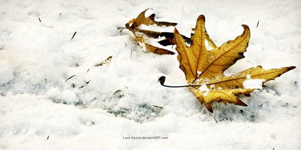 Winter fall wallpaper