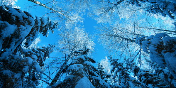 winter                  by karil 51 Best Winter Wallpapers For Your Desktop
