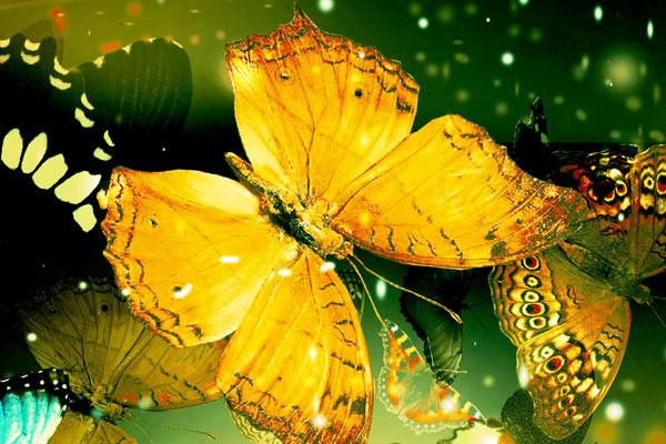 butterfly 25 Fantasy Wallpapers