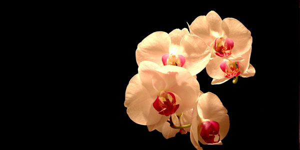 Orchid Picture