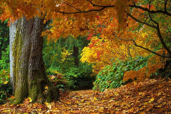 autumn forest wallpaper 20 Forest Wallpapers