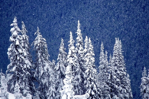 forest wallpaper. SNOWING FOREST WALLPAPER