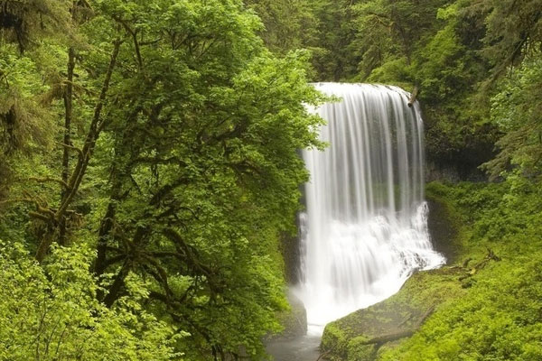 waterfall forest wallpaper 20 Forest Wallpapers