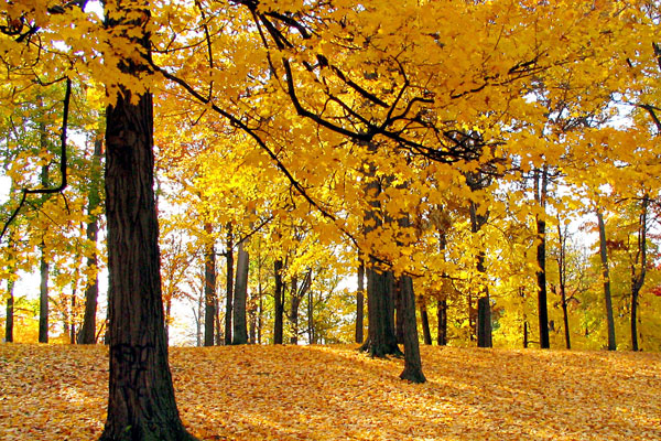 yellow forest wallpaper 20 Forest Wallpapers