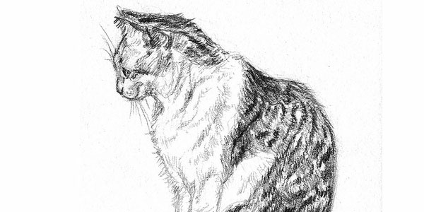cat 50 Splendid Pencil Drawings