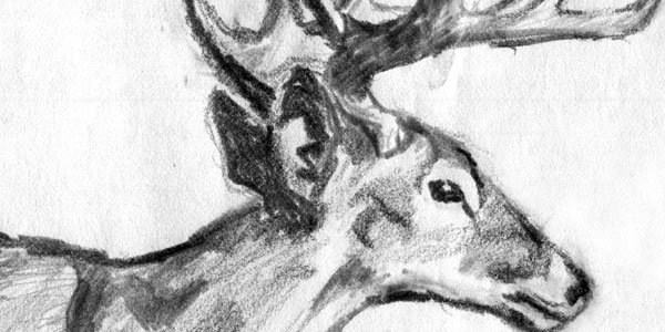deer 50 Splendid Pencil Drawings