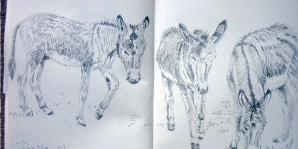 donkey 50 Splendid Pencil Drawings