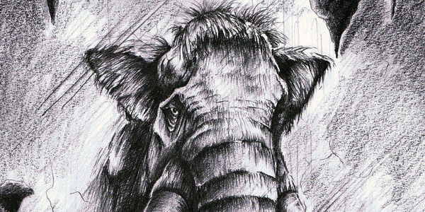 elephant 50 Splendid Pencil Drawings