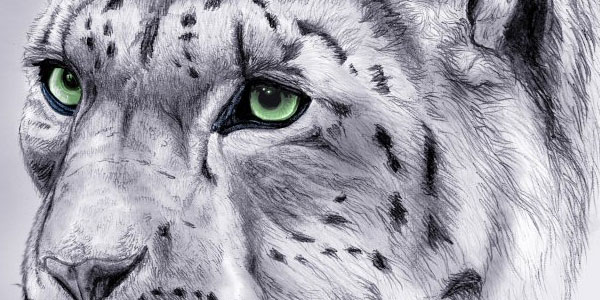 lion 50 Splendid Pencil Drawings