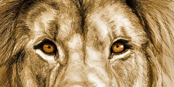 lions 50 Splendid Pencil Drawings