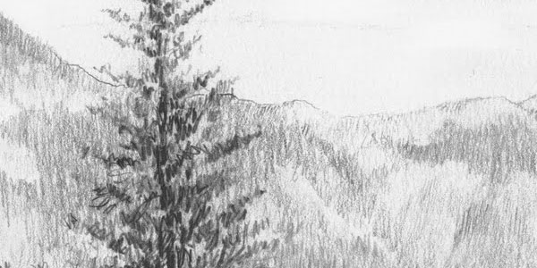 nature 50 Splendid Pencil Drawings
