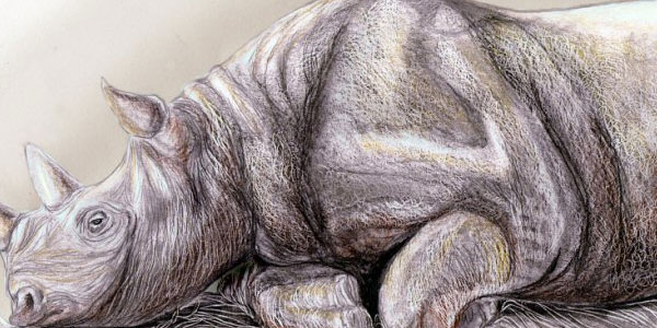 rhino 50 Splendid Pencil Drawings