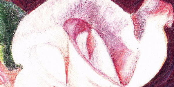 rose 50 Splendid Pencil Drawings