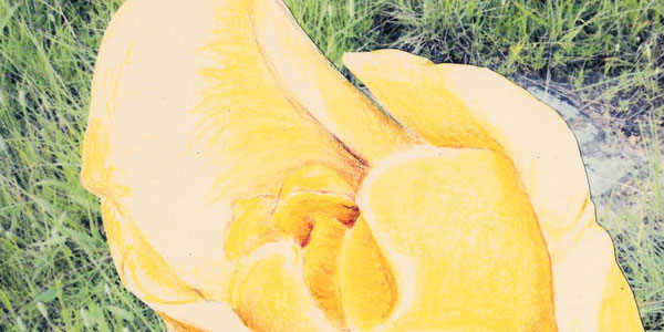 yellow rose 50 Splendid Pencil Drawings