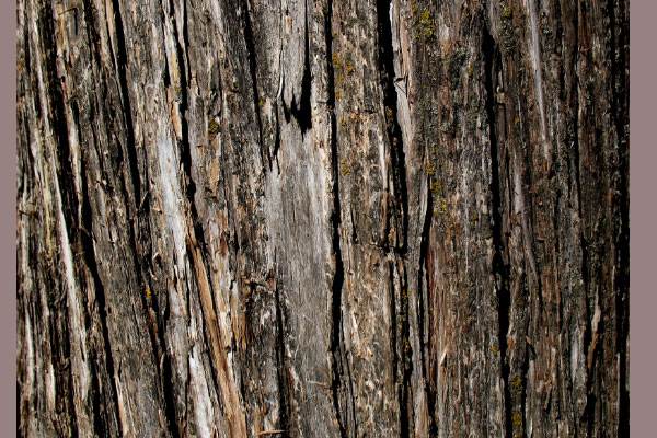tree bark texture 105 Photoshop Textures For Designers