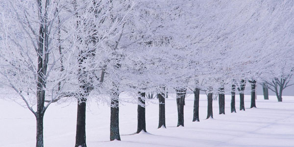 winter photography 20 Free Winter Desktop Backgrounds