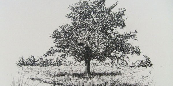 the tree 60 Fantabulous Pencil Sketches