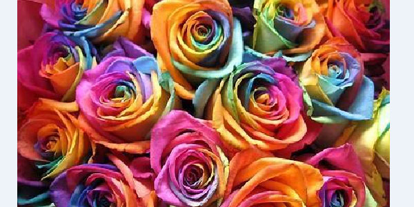 color flowers 30 Colorful Rainbow Backgrounds