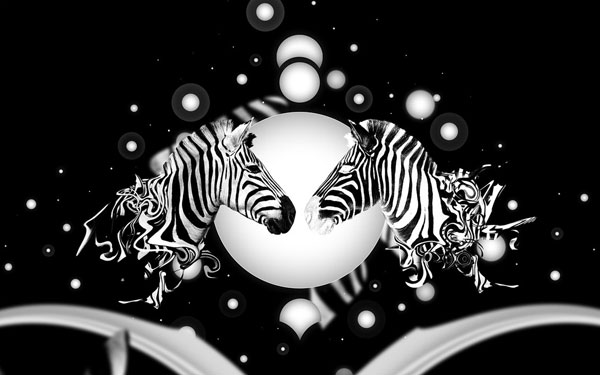 half zebra wallpaper 25 Zebra Wallpapers