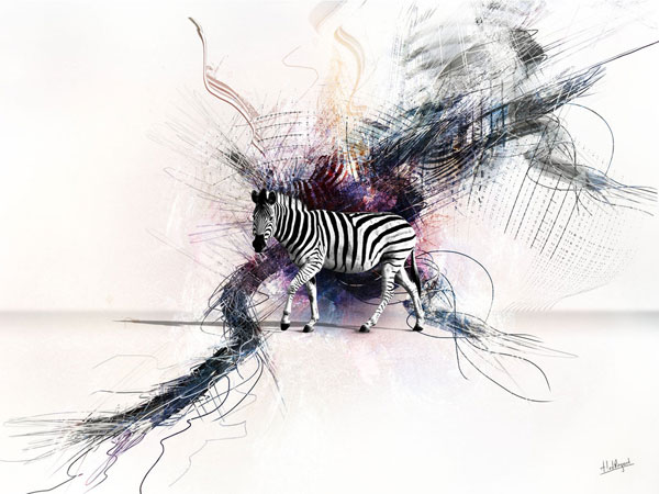 walking zebra wallpaper 25 Zebra Wallpapers