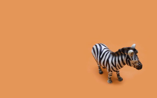 zebra toy wallpaper 25 Zebra Wallpapers