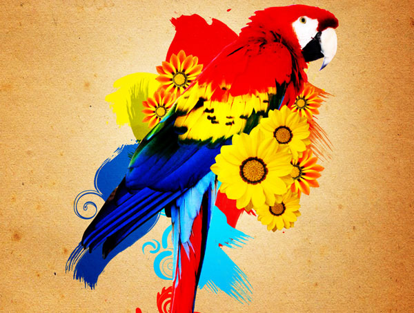 Beautiful Parrot Photo Manipulation in Gimp