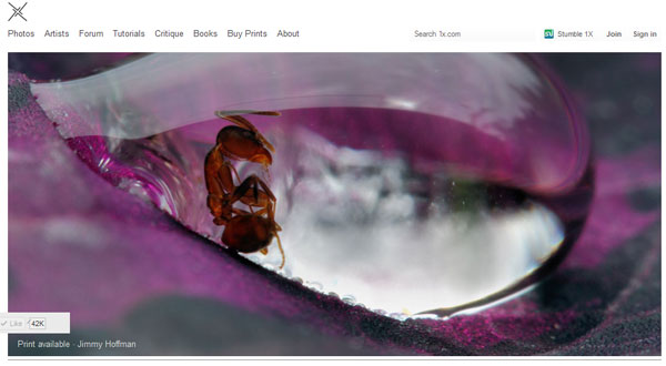 best photography site 20 Top Photography Websites