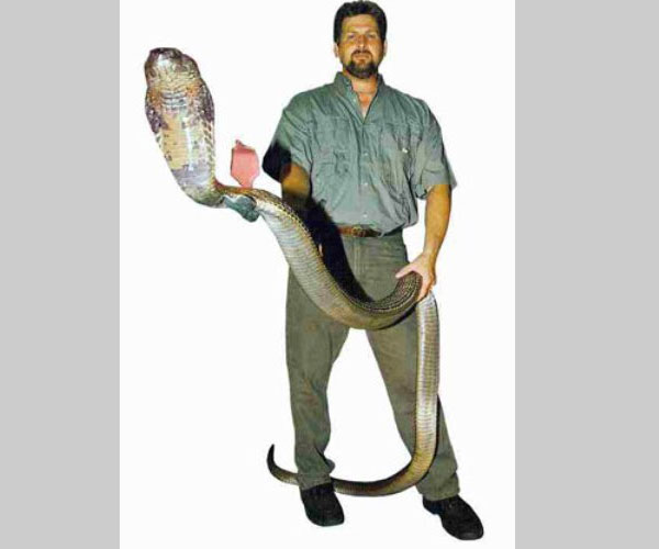 snake man 25 Funny Photoshop Disasters