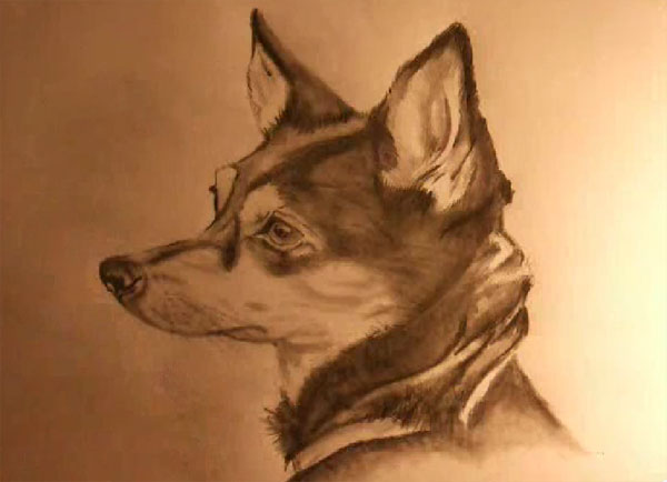 Image of: Sounds How To Draw Realistic Dog Boardviral 10 Videos Teaching How To Draw Animals