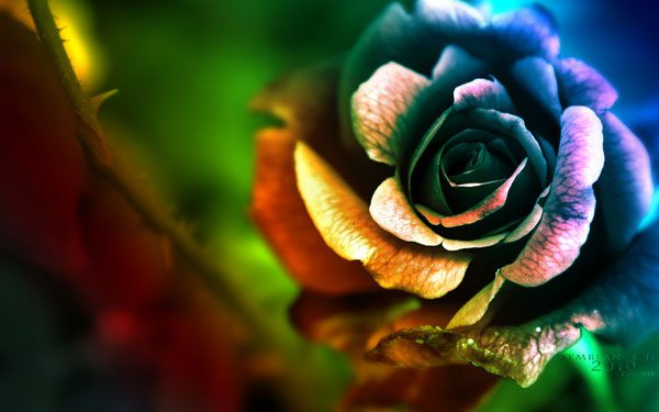 Flowers Wallpapers 40 Most Beautiful Examples Design Press
