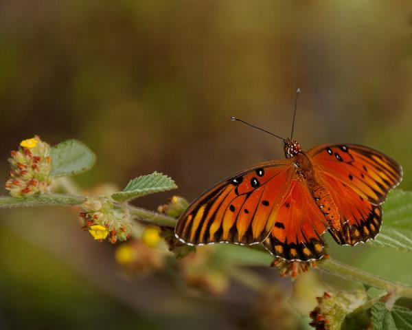 leopard print butterfly 30 Beautiful Butterfly Pictures