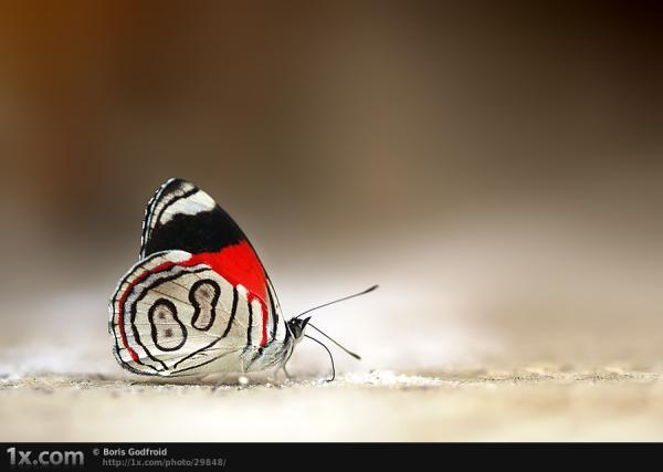 number 8 butterfly 30 Beautiful Butterfly Pictures