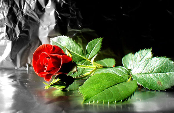 wallpaper red roses pink