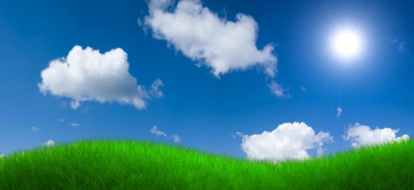 3D Grass and Sky