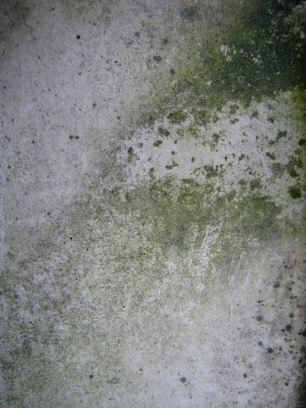 Green Drywall Texture