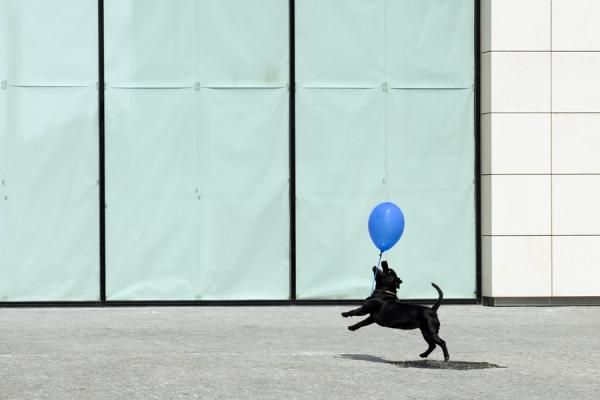 Dog With Blue Balloon