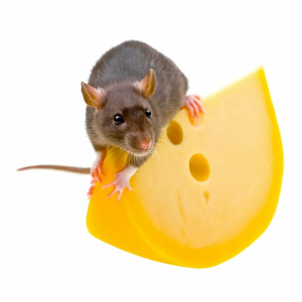 Mouse On Cheese