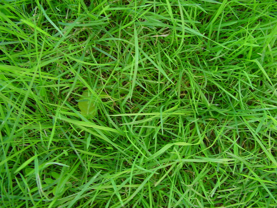 fresh green texture 25 Lovely Grass Texture Collection
