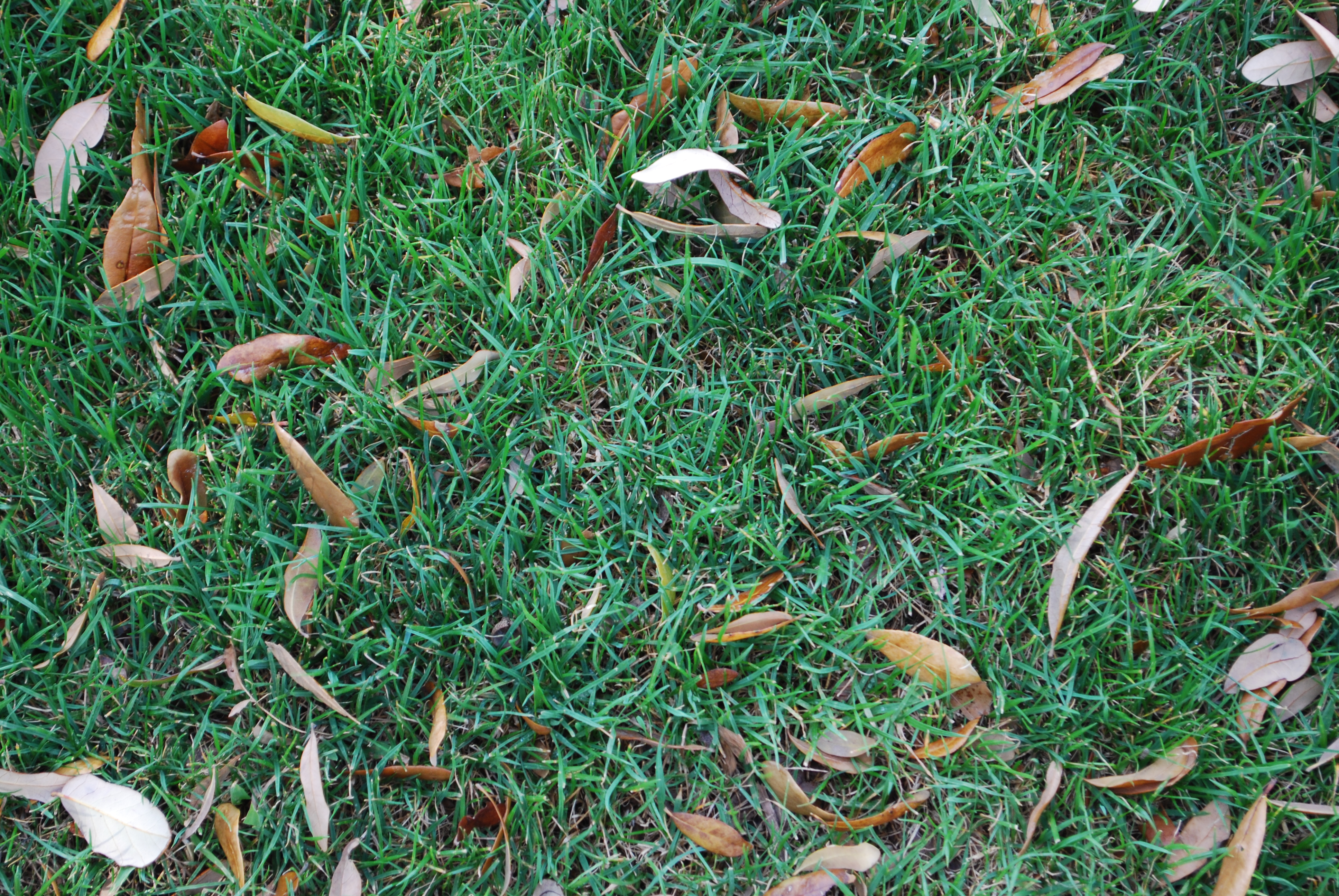 Green Grass Dry Leaves Texture