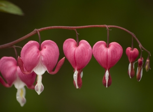 appealing heart flowers 40 Lovely Pictures Of Hearts