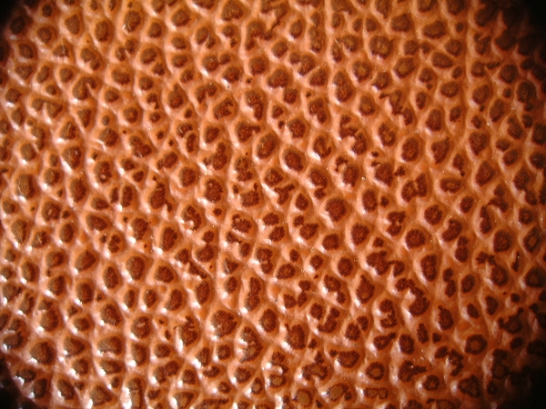Leather Skin Texture