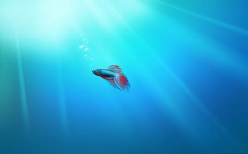 Windows 8 Fish Wallpaper