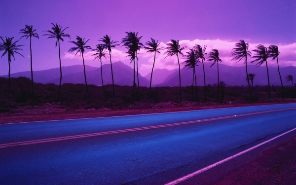 purple palm trees 30 Splendid Purple Background Collection