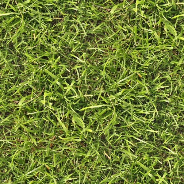Grass Texture 25 Lovely Collections Browse Design Press Now