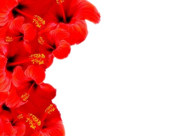 Red Floral Border Backgrounds