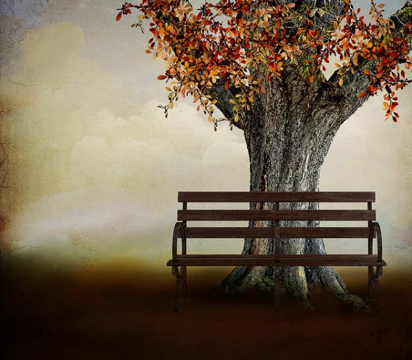 Lonely Bench With Tree