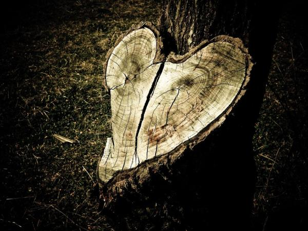Tree Trunk Broken Heart